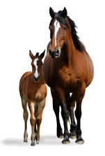 HorseAbility