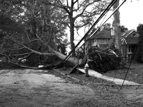 One of many uprooted trees in Wantagh after being hit by Sandy