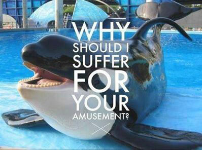 SeaWorld to End Orca Capivity