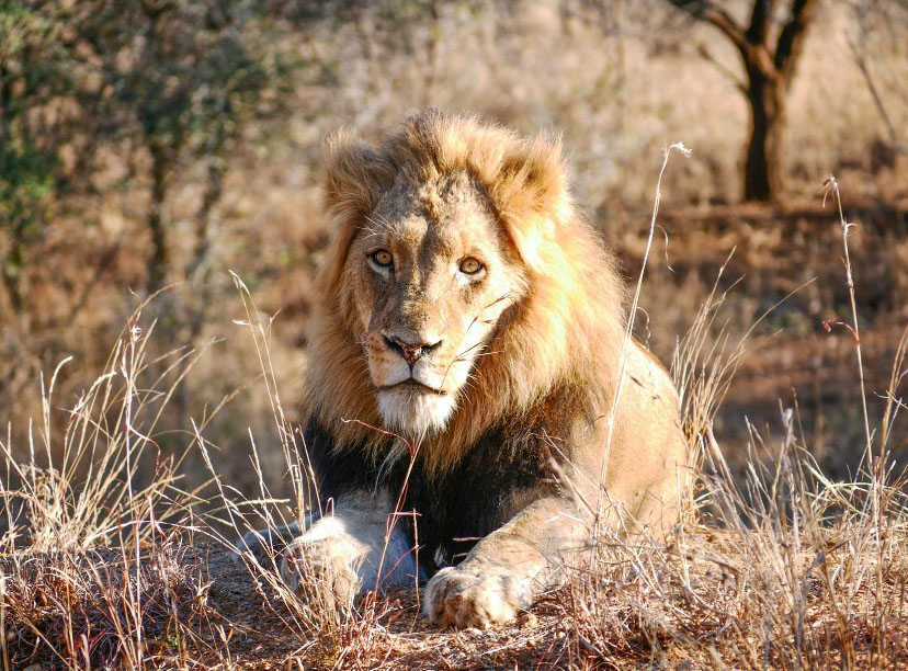 Lions, Kudu and Zebras and a Great Trip to South Africa