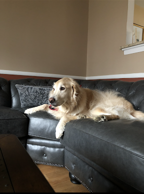 Harry likes to recline on the couch.