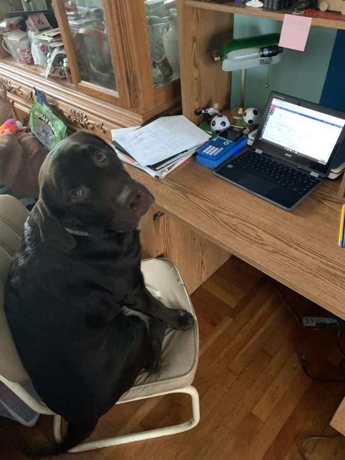 Buddy also enjoys helping with virtual learning.