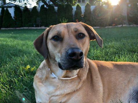 Belle was a perfect quarantine companion!