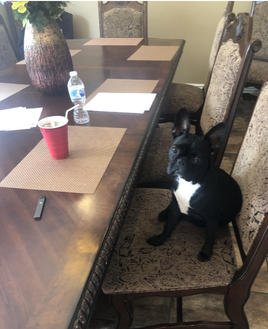 Lucy loves to sit at the table with her humans.