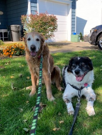 The Montalti pets! Molly is the one on the left, sitting. Bentley, the narrator of the article, is resting on the lawn.